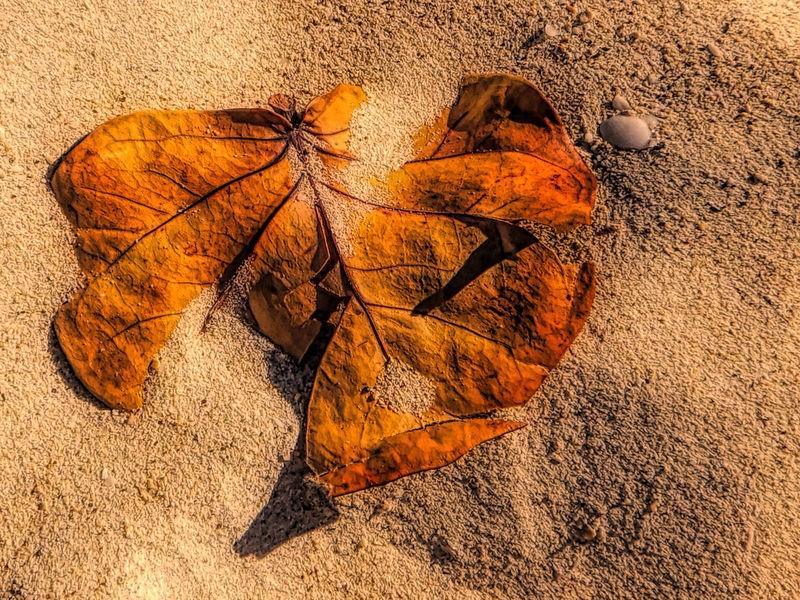 Leaf on Grenada Beach