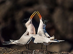Winner May Wildlife