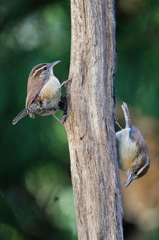 Backyard birds in Newton, Mass.