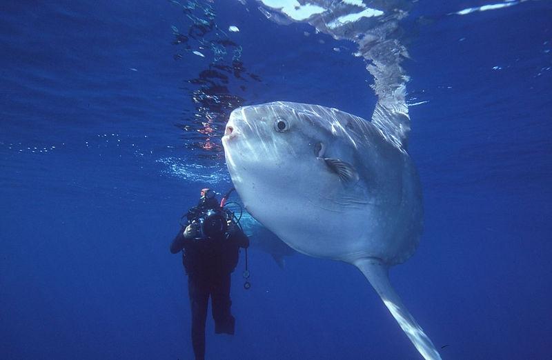 Friendly Mola