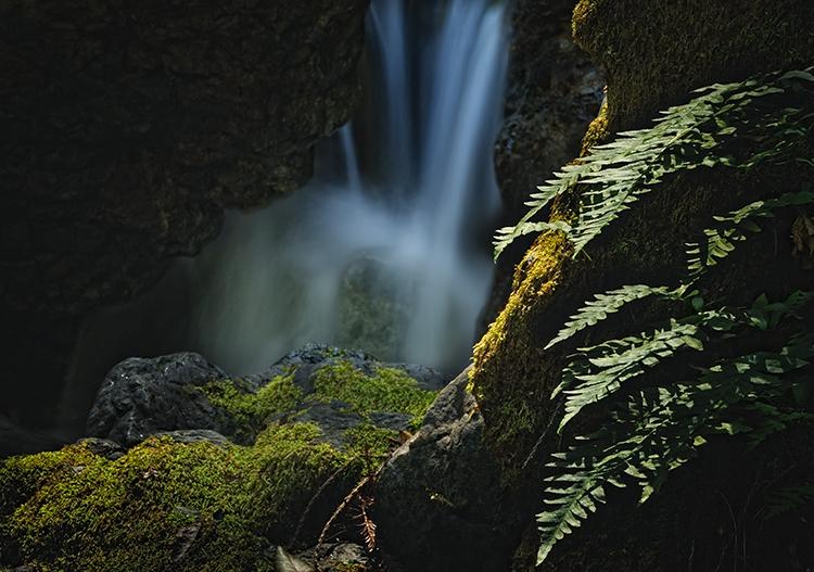 Big Sur: Fern Grotto