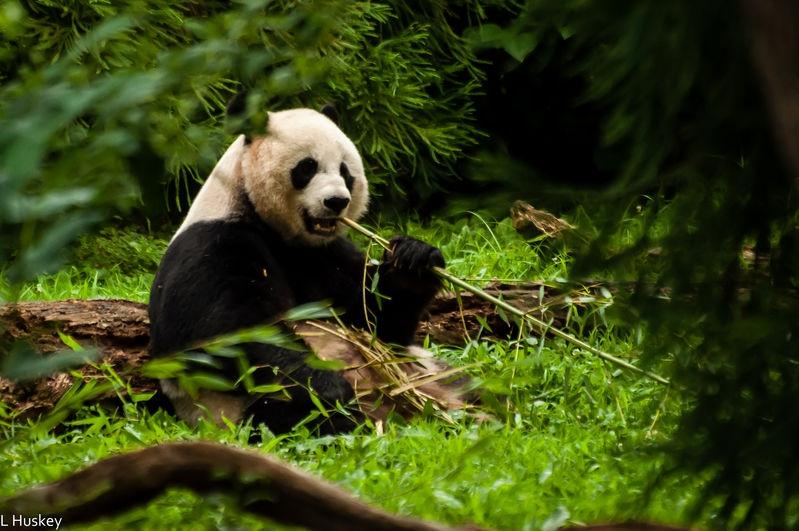 Furlough_Day_-_National_Zoo_22_Jul_13-347.jpg