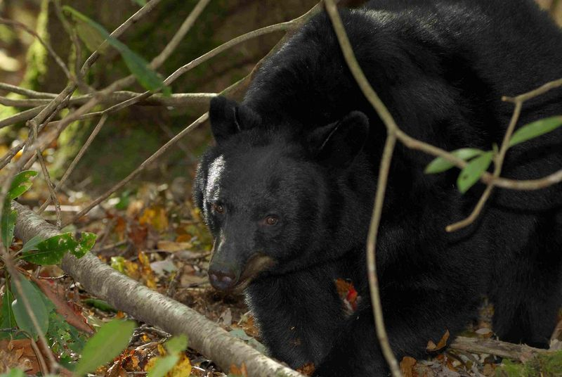 Bear 4