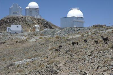Donkeys in the desert