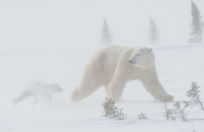 A Walk in a Blizzard