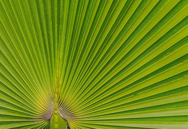 Natural Patterns - Green rays