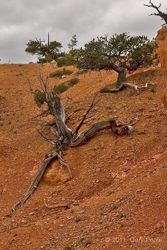 Tree Climbing the Hill