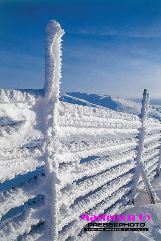Reindeer fence in winter