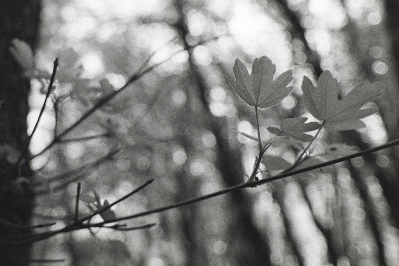Leaf_Abstract.jpg