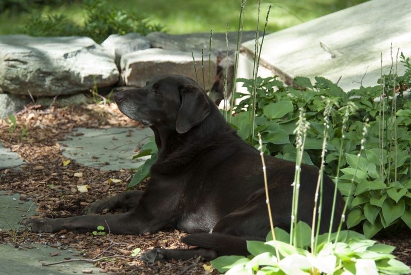 Olive in the garden