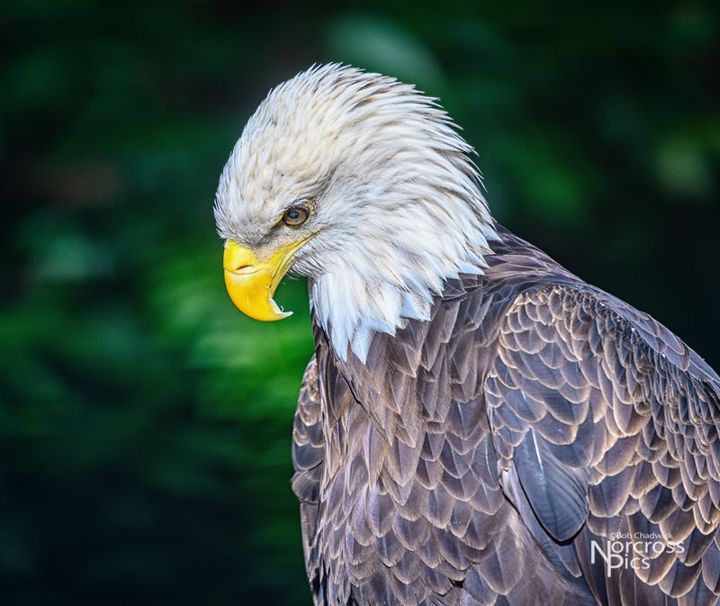 Audobon Center for Birds of Prey