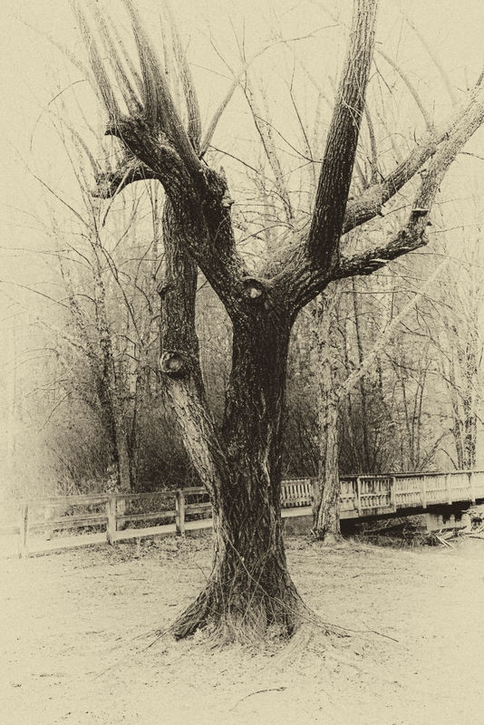 TREE_and_WALKWAY1