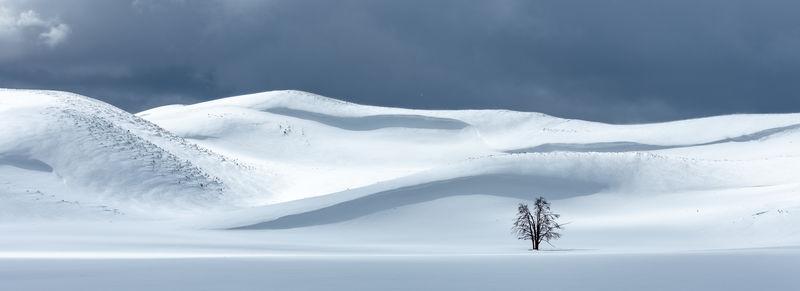 Yellowstone Snowscape
