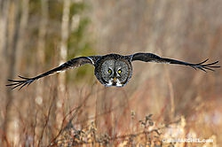 Birds in Flight (BillMarchel)