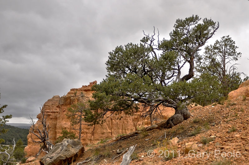 Tree on Arches Trail