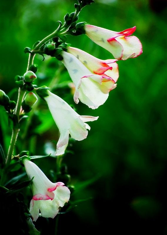 Awesome Echinacea Flower.  :)