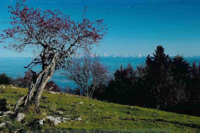 Swiss Jura Landscape