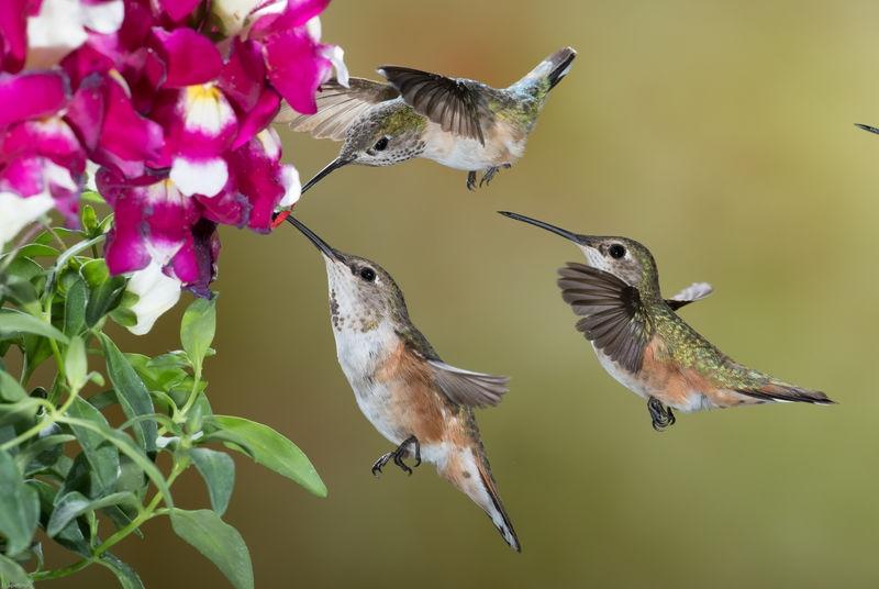 Birds of Bull River Ranch, British Columbia