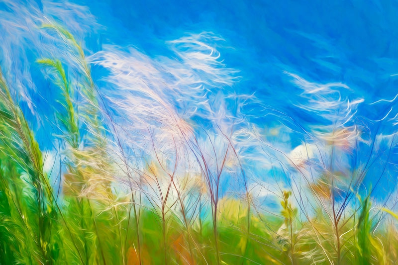 Swaying in the Breeze